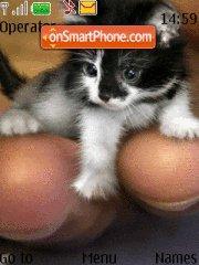 Cute Cats 01 Theme-Screenshot