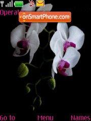 Capture d'écran Orchids thème