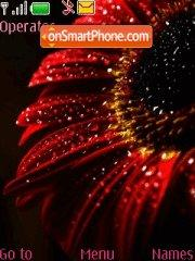 Chrysanthemum theme screenshot