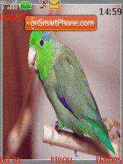 Capture d'écran Parrot thème