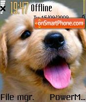 Doggy 05 theme screenshot