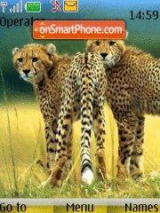 Skinny Cheetahs theme screenshot