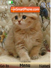 Kittens, 24 pictures theme screenshot