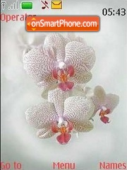 Orchid2 theme screenshot