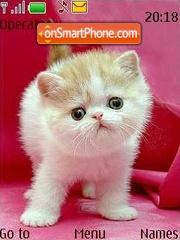 Kitten es el tema de pantalla