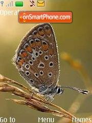 Summer, butterflies theme screenshot