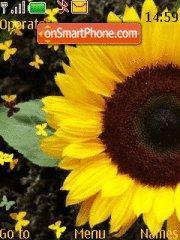 Sunflower theme screenshot