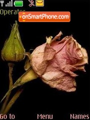Faded rose theme screenshot