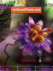 Colorfull Flower theme screenshot