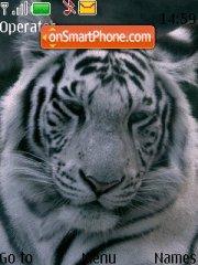 1 tiger Theme-Screenshot