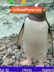 Gentoo Penguins es el tema de pantalla