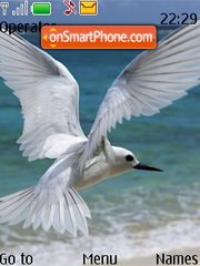 White Bird Flying theme screenshot