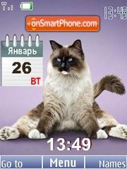 Yoga cats theme screenshot