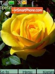 Yellow roses01 tema screenshot