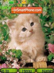 Kitten in Grass tema screenshot