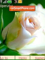 Скриншот темы Roses
