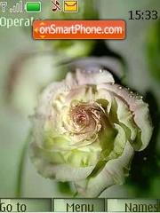 Charm roses Theme-Screenshot