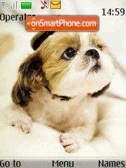 Sweet Puppy es el tema de pantalla