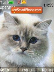 Birman Cat theme screenshot