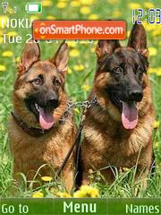Sheepdogs-24picture es el tema de pantalla