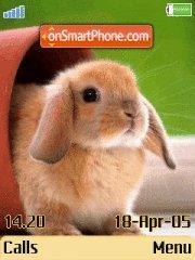 Sweet Rabbit theme screenshot