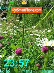 Wild Flowers theme screenshot