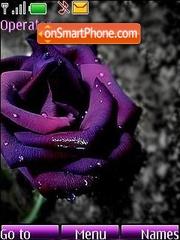 Violet rose theme screenshot