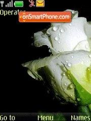 Rose tema screenshot