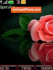 Roses es el tema de pantalla