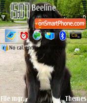 Newfoundland Dog N3250 theme screenshot