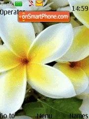 White flower 03 theme screenshot