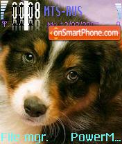 Dogs 01 es el tema de pantalla