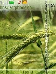 Wheat 01 theme screenshot
