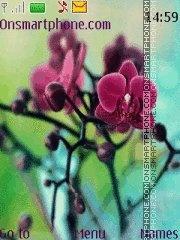 Orhideya es el tema de pantalla