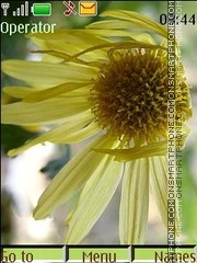 Faded chrysanthemums es el tema de pantalla