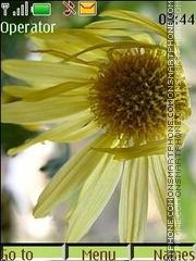Скриншот темы Faded chrysanthemums