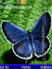 Blue butterfly theme screenshot