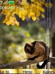Cat3 es el tema de pantalla