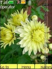 Autumn flowers theme screenshot