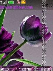 Purple flower es el tema de pantalla