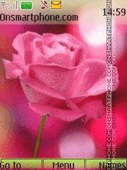 Pink rose 3 es el tema de pantalla