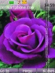 Скриншот темы Purple rose 2