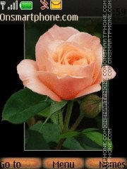 Orange rose 3 theme screenshot
