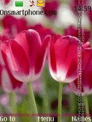 Tulip es el tema de pantalla