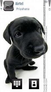 Puppy 07 theme screenshot