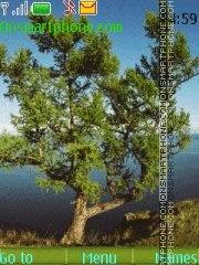 Pine-trees theme screenshot