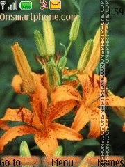 Orange flowers tema screenshot