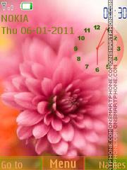 Pink chrysanthemum es el tema de pantalla