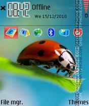 Lady Bug 05 theme screenshot