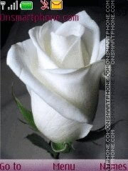 White rose es el tema de pantalla